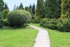 Härlig trädgård med gräsmatta, barrträd och pilen Royaltyfri Fotografi