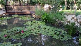 Härlig trädgård med Lotus blommor royaltyfri fotografi