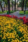 Härlig trädgård och blommor i Ho Chi Minh City Royaltyfria Foton
