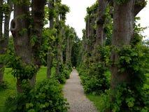 härlig trädgårds- bana Arkivbild