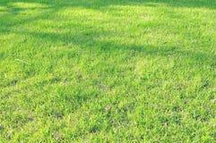 härlig trädgårds- lawn Arkivbild