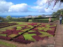 Härlig trädgårds- madeira Portugal royaltyfri bild
