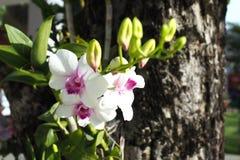härlig trädgårds- orchid royaltyfri bild
