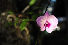 härlig trädgårds- orchid royaltyfria foton
