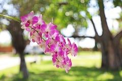 härlig trädgårds- orchid royaltyfria bilder