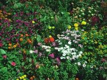 härlig trädgårds- sikt Arkivfoton