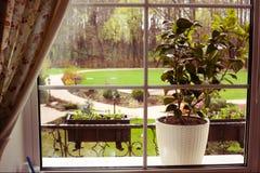Härlig trädgårds- sikt från fönstret Arkivbilder