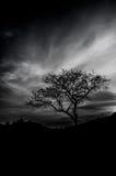 Härlig trädkontur Fotografering för Bildbyråer