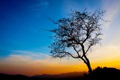 Härlig trädkontur och blå himmel för solnedgång Royaltyfria Foton