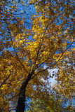 härlig tree fotografering för bildbyråer