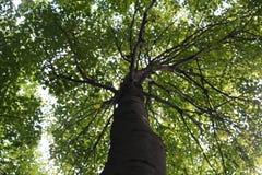 härlig tree Arkivbilder