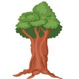 härlig tree Royaltyfri Fotografi