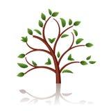 härlig tree Arkivfoto