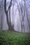 Härlig tree i en skog med grönt gräs arkivbilder