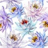 Härlig tropisk blom- sömlös modell Stora lotusblommablommor i pastellfärgade skuggor på vit bakgrund illustratören för illustrati Royaltyfri Foto