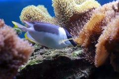 härlig tropisk closeupfisk Arkivfoto