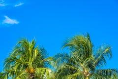 Härlig tropisk natur med kokosnötpalmträdet på blå himmel och det vita molnet arkivfoton