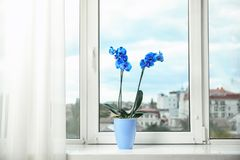 Härlig tropisk orkidéblomma i kruka royaltyfria bilder
