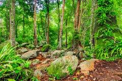 Härlig tropisk rainforest och ström i djup skog, Arkivfoton