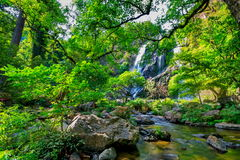 Härlig tropisk rainforest och ström i djup skog, Royaltyfri Fotografi