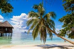 Härlig tropisk strand i Maldiverna Royaltyfri Bild