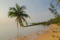 Härlig tropisk strand, kokosnötpalmträd i ön Koh Phangan, Thailand royaltyfria foton