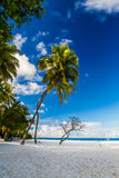 Härlig tropisk strand, Maldiverna Arkivfoton