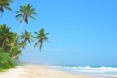 Härlig tropisk strand med inget, palmträd och guld- sand Vågrulle in i stranden med vitt rent skum blått hav Arkivbild