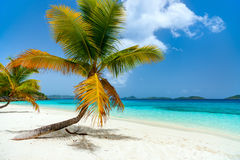 Härlig tropisk strand på karibiskt royaltyfri bild