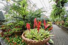 Härlig tropisk trädgård Royaltyfri Foto