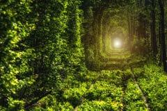 Härlig tunnel av gröna träd Tunnel av förälskelse Gammal övergiven järnväg linje, i gränden av gröna träd Arkivfoto