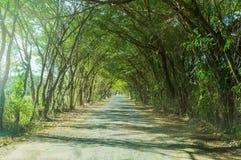 Härlig tunnel av trädlandsvägen Arkivbild