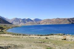 Härlig turkosPangong sjö i Leh, Indien Arkivbild
