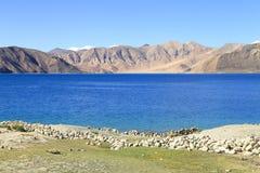 Härlig turkosPangong sjö i Leh, Indien Arkivfoton