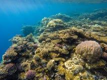 Härlig undervattens- korallrev och tropisk fisk, marin- liv royaltyfria foton