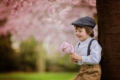 Härlig ung förskole- pojke som står i en körsbärsröd blomning gard Arkivbild