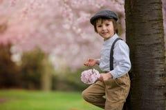 Härlig ung förskole- pojke som står i en körsbärsröd blomning gard Royaltyfri Fotografi