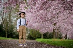 Härlig ung förskole- pojke som står i en körsbärsröd blomning gard Arkivfoton
