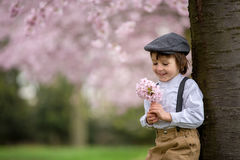 Härlig ung förskole- pojke som står i en körsbärsröd blomning gard Royaltyfri Bild