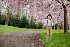 Härlig ung förskole- pojke som står i en körsbärsröd blomning gard Arkivbilder