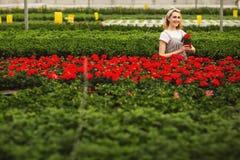 Härlig ung le flicka, arbetare med blommor i växthus Begreppsarbete i v?xthuset, blommor kopiera avst?nd royaltyfri bild