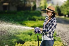 Härlig ung trädgårdsmästarekvinna som bevattnar trädgården i varm sommardag royaltyfria foton