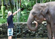Härlig unik elefant med manturisten på en elefantbeskyddreservation i Bali Indonesien arkivfoton