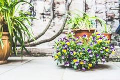 Härlig uteplats med blomkrukor och blommor, behållare som planterar och arbeta i trädgården Royaltyfri Fotografi