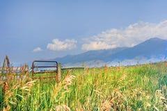 Härlig utsikt av den Absaroka berglantgården Arkivbilder