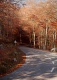 härlig väg Royaltyfri Fotografi