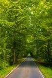 Härlig väg i mitt av gröna träd arkivfoto