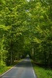 Härlig väg i mitt av gröna träd royaltyfri bild