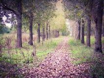 Härlig väg i skogen Fotografering för Bildbyråer