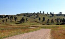 Härlig väg till och med Blacket Hills i Custer State Park arkivfoto